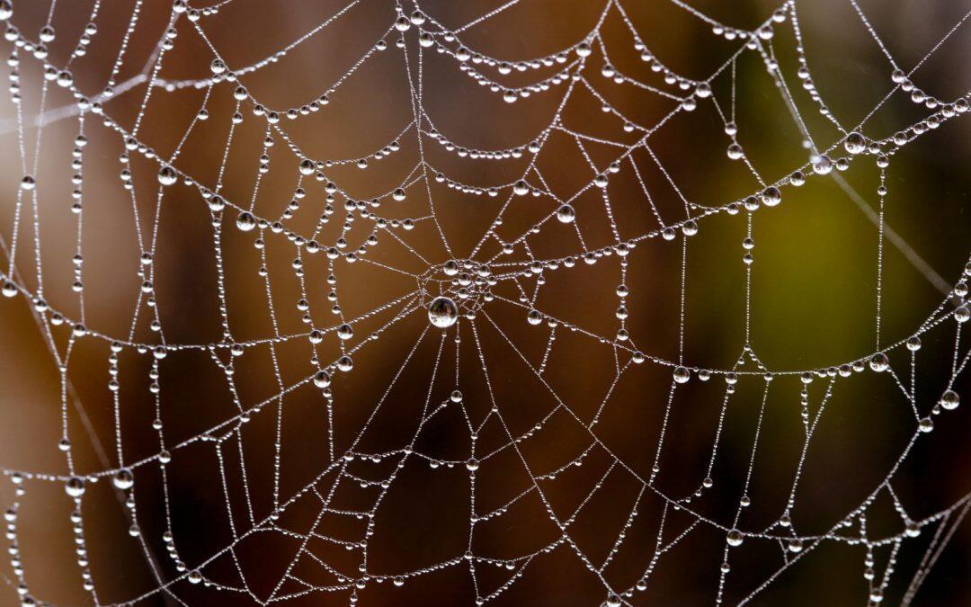 حرير العنكبوت: مادة أساسية في المجال الطبّي والعسكري