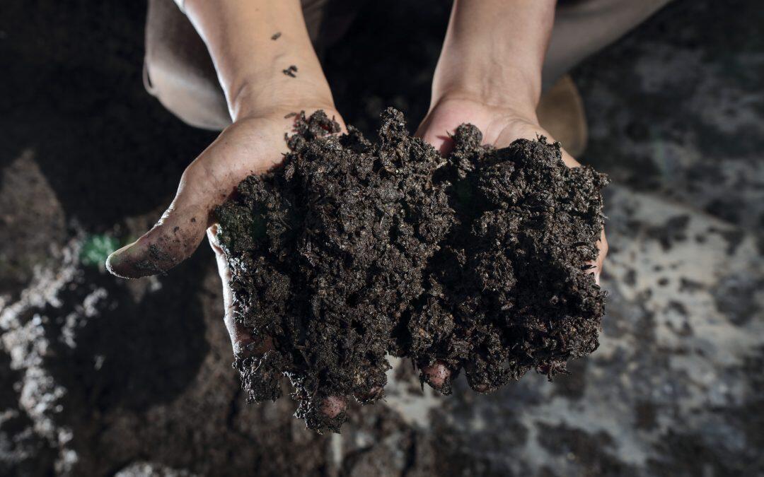 الزراعة العضوية في لبنان : مشروع قانون في الأدراج وشهادات اعتماد مشكوك بمصداقيتها ووعود بتحرك الإقتصاد