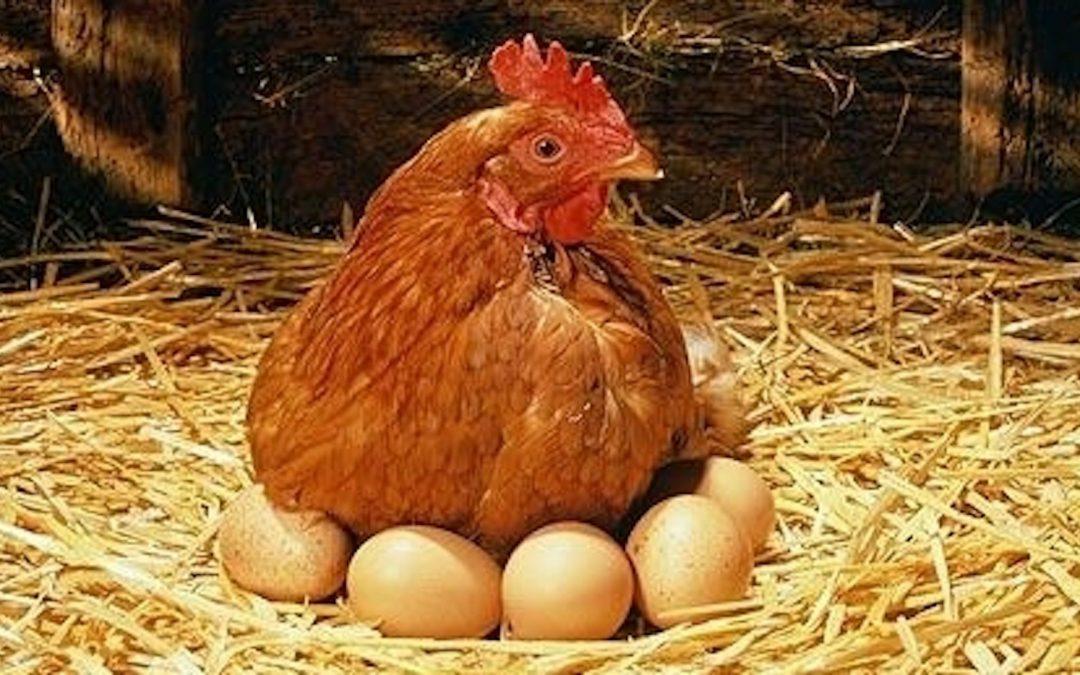 ًملف النفايات في لبنان، الدجاجة التي تبيض ذهباً خالصا