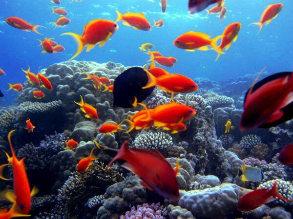 الإحتباس الحراري: يقلّص حجم الأسماك ويؤدي لهجرتها إلى محيطات أخرى