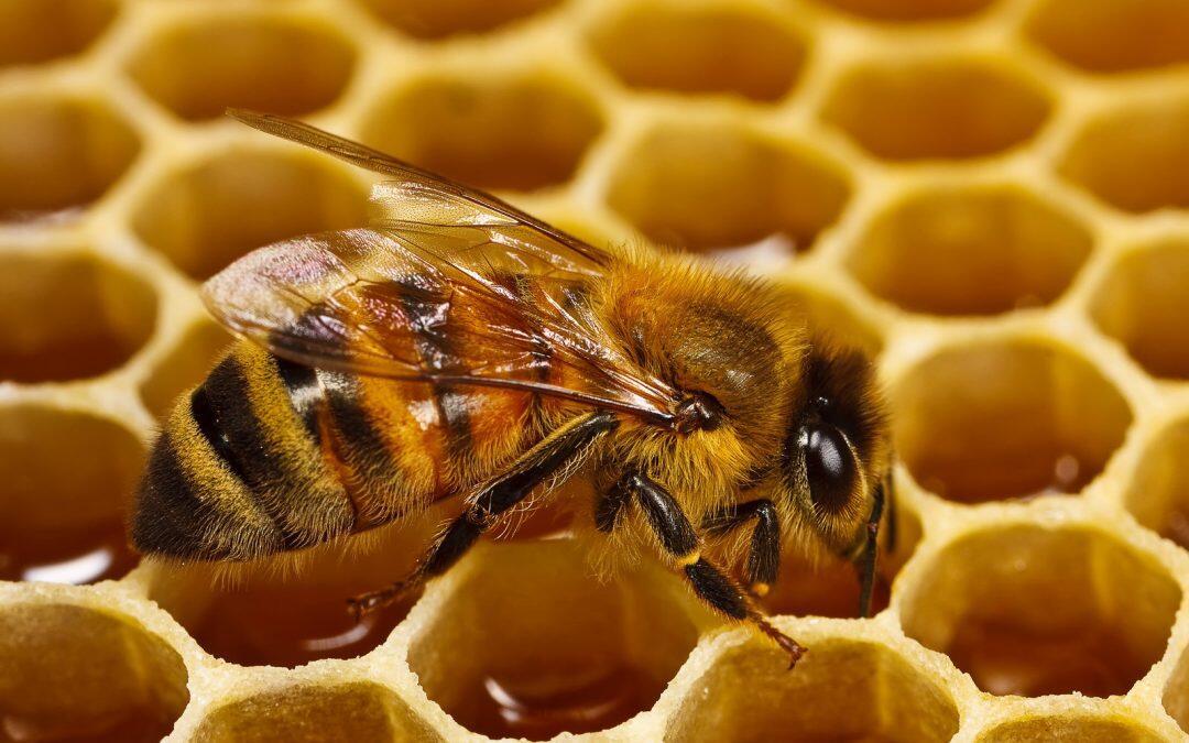 الإحتفال بيوم النحل العالمي الأول: للحفاظ على الغذاء والتنوّع البيولوجي
