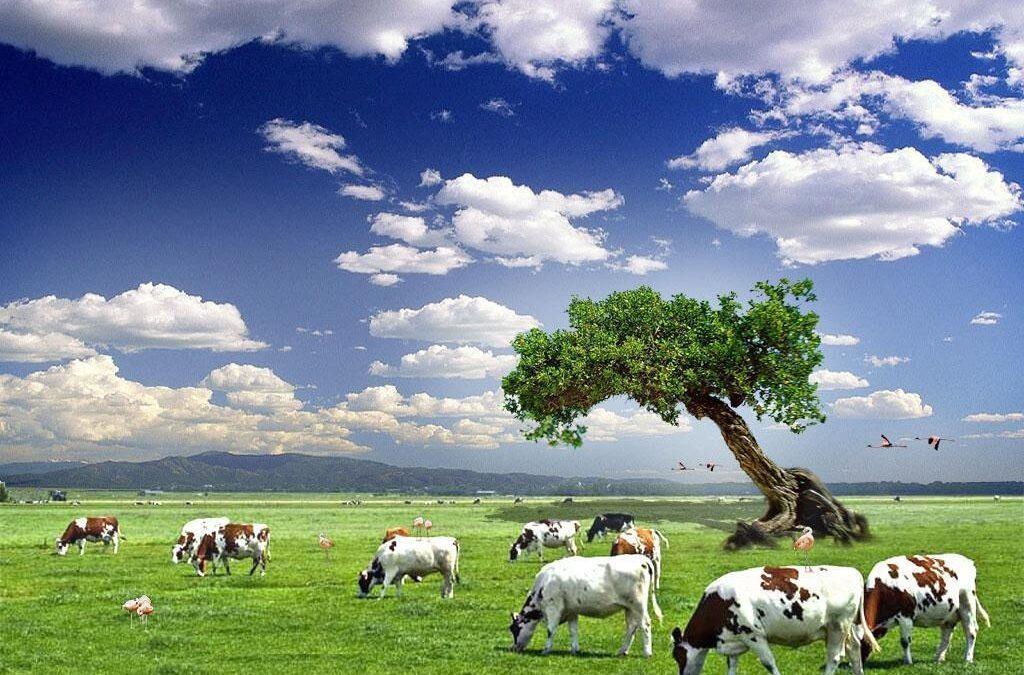 إنتاج الغذاء الحيواني مدّمر للبيئة.. ولحوم الأبقار تتربع على قمة الهرم