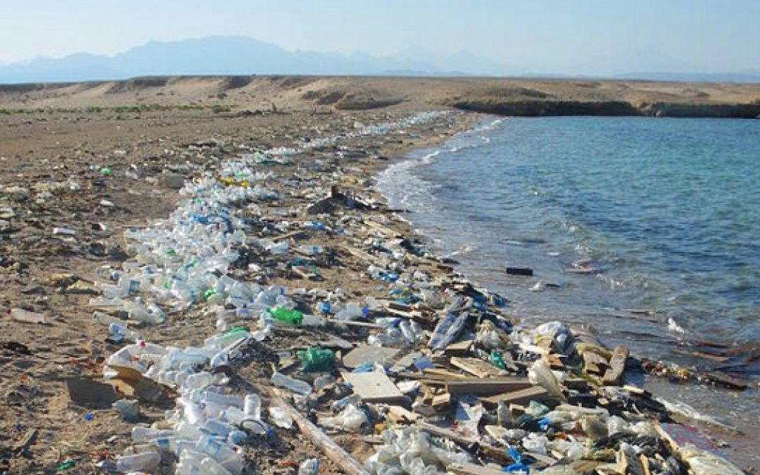 مياه البحر الملوّثة : بؤرة للعديد من الأمراض المتنقلة الخفيفة والخطيرة