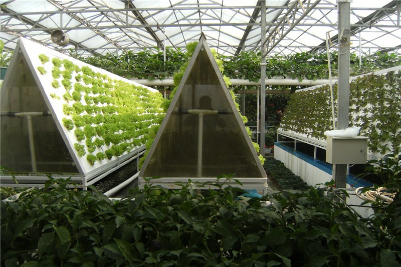 نباتات مقتصدة في إستهلاك المياه … ومحاصيلها ذات إنتاجية أكبر