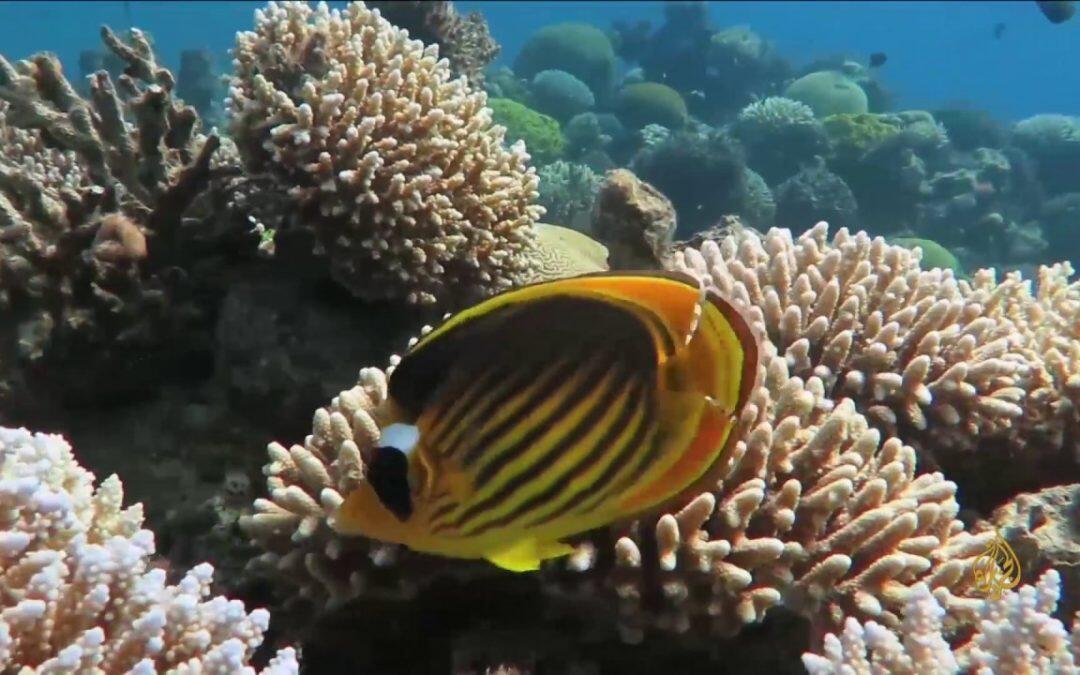 إئتلاف جديد لإنقاذ الشعاب المرجانية: 90 % منها سيفقد  في العقود القليلة القادمة
