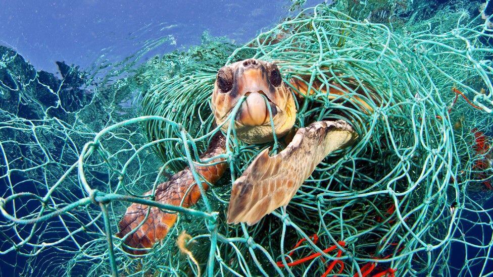البشر يهددون الحياة البريّة… إنقراض التنوّع البيولوجي؟