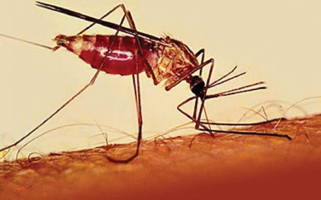 إطلاق إستجابة جديدة للحماية من خطر الإصابة بالملاريا : إرتفاع أعداد الضحايا في العام 2018