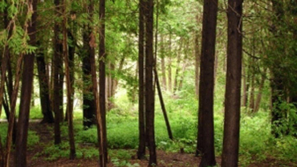غابات المتوسط تتزايد ولكن… 80 مليون هكتار من الأراضي متدهورة