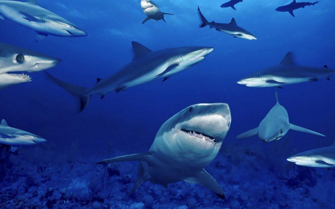 أسماك معرضة للإنقراض.. منها 17 نوعاً من أسماك القرش