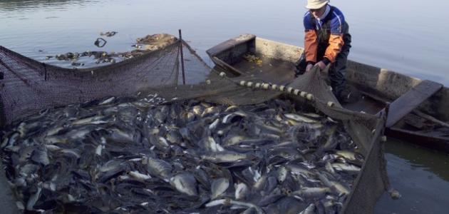 الصيد غير القانوني: يسلب 26 مليون طن من الأغذية البحرية وخسائر بقيمة 23 مليار دولار سنوياً