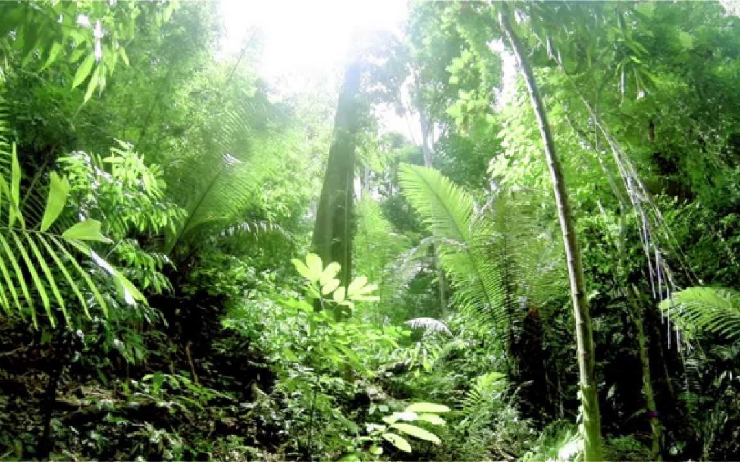 الغابات المدارية تواجه خطر فقدان  قدرتها على إحتباس الكربون