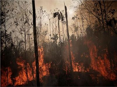 الأمطار تساعد في إخماد حرائق الغابات المستعرة في بوليفيا منذ شهرين