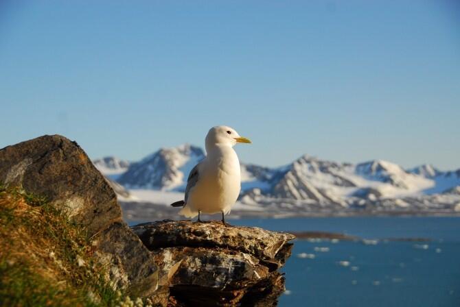 """Greenarea, y La ONU  en una campaña para """"Protege las aves""""."""
