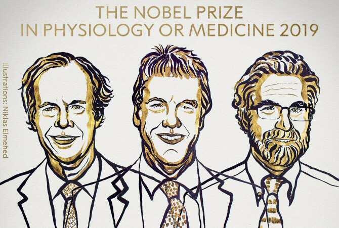 Nobel de Fisiología por descubrir cómo las células se adaptan a la reserva de oxígeno