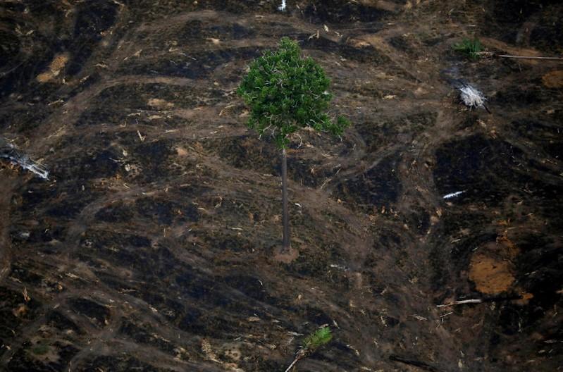 التصحر يزيد في غابات الأمازون إلى أقصى حد منذ 11 عاما