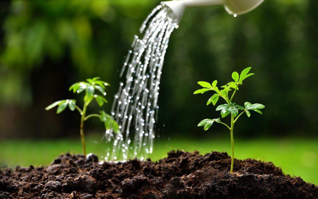 الأمم المتحدة : عام 2020 السنة الدولية للصحة النباتية