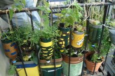 waste-tracking-with-greenhalo-by-green-halo-recycle-gardening-58