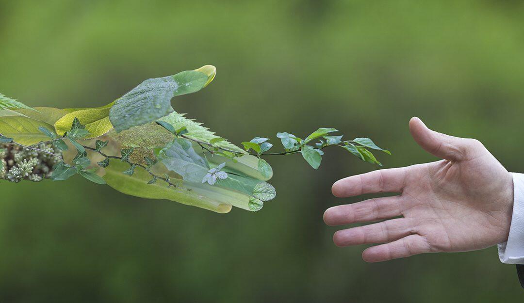الإقتصاد الأخضر : طوق نجاة العالم مع إرتفاع وفيات تلوّث الهواء