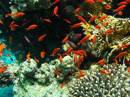بسبب الاحتباس الحراري.. 60% من الأسماك قد تنقرض