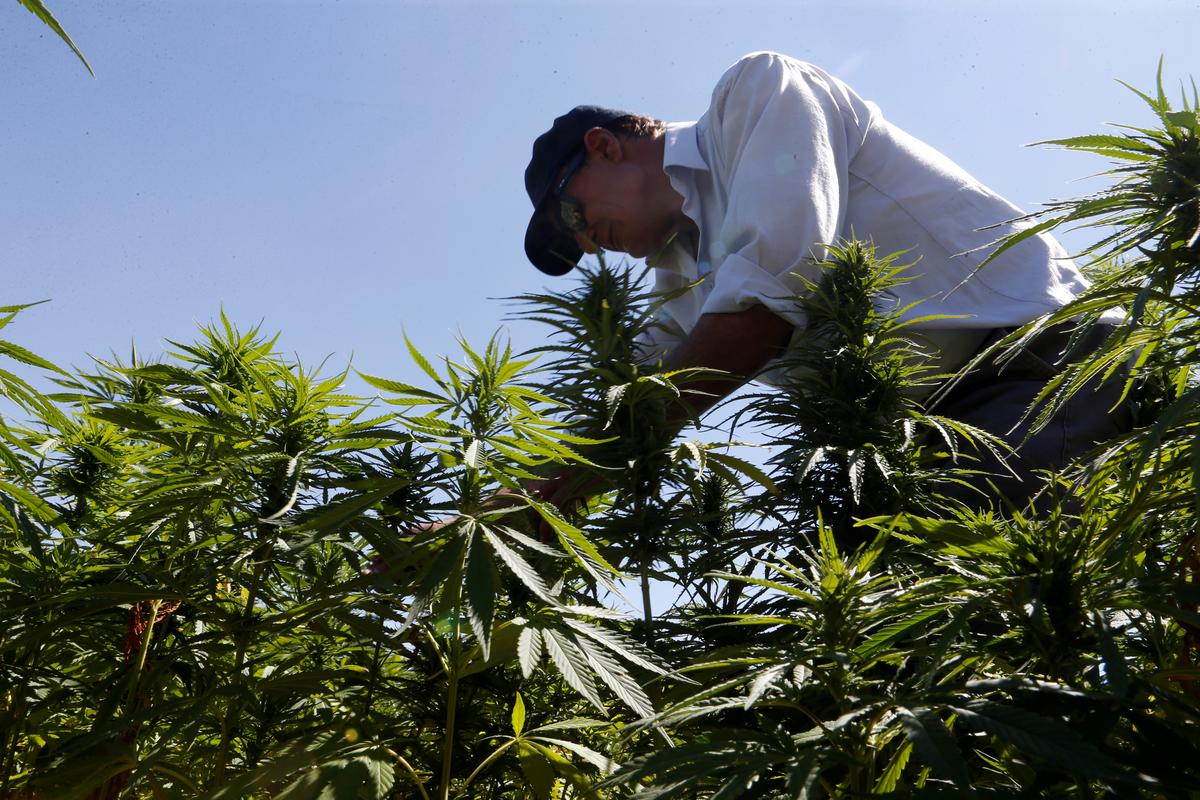المخدرات خطر كبير يهدد البيئة والتنوع الحيوي!