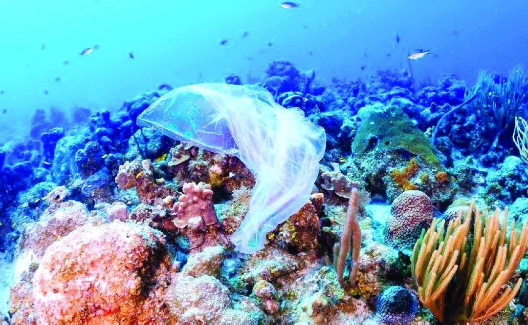 النشاط البشري مسبب الضرر الأكبر للكائنات البحرية