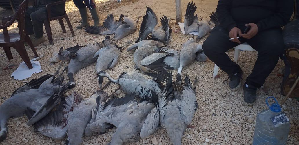 جمعية حماية الطبيعة في لبنان تدعو السلطات اللبنانية الى انفاذ قانون الصيد البري