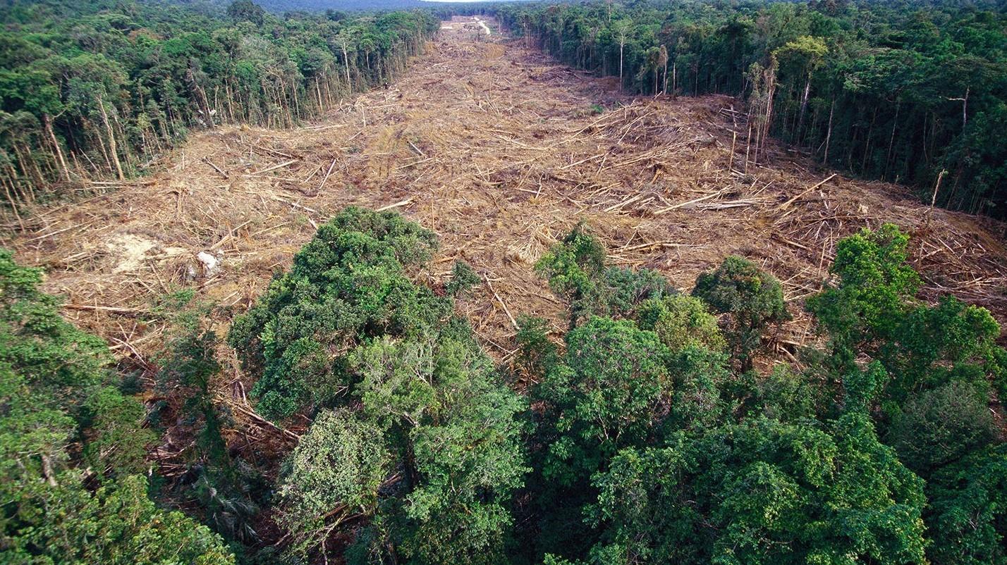 الصندوق العالمي للطبيعة: تدمير 43 مليون هكتار من الغابات الاستوائية المطيرة