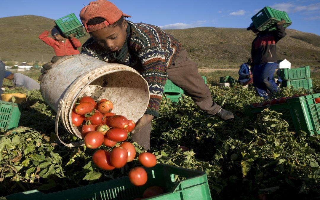 الفاو: عمالة الأطفال تؤدي الى إدامة وترسيخ دوّامة الفقر