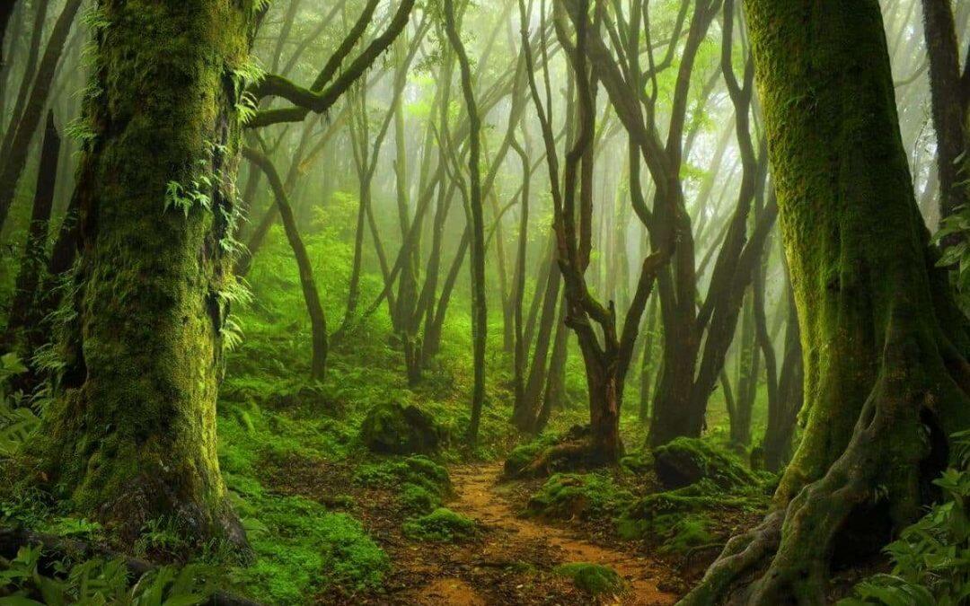 """3% فقط من أراضي الكوكب """"سليمة بيئياً""""… والاشجار الاكثر تضرراً"""