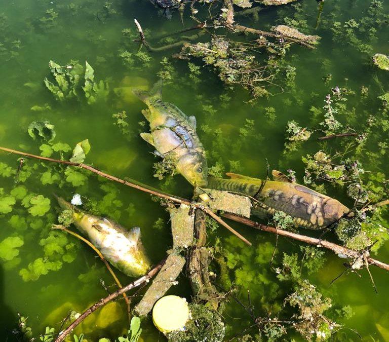 تقرير أولي حول نفوق الأسماك في بحيرة القرعون