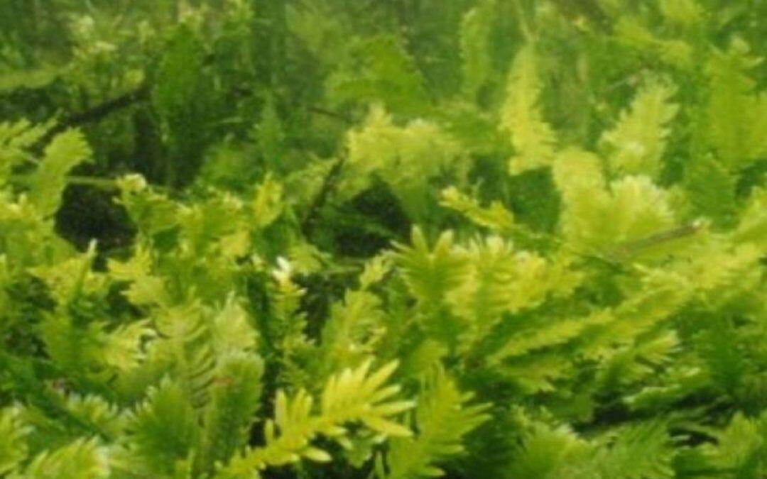 """""""النباتات الغازية"""" تنتقل بعدّة طرق وتسبّب خسائر  بالمليارات"""