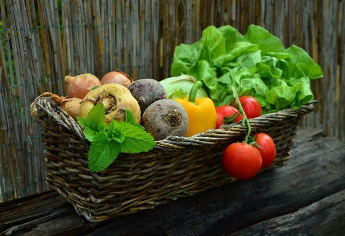 نصائح خضراء لتقليل هدر الغذاء والحفاظ على البيئة