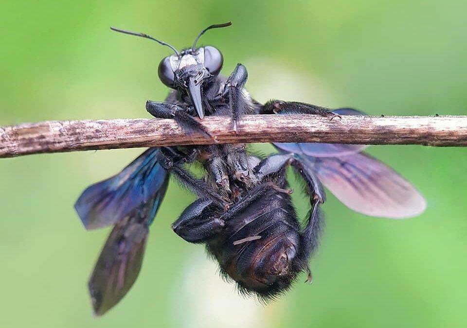 """حشرات تحوّل بقايا الطعام إلى """"كنوز"""""""