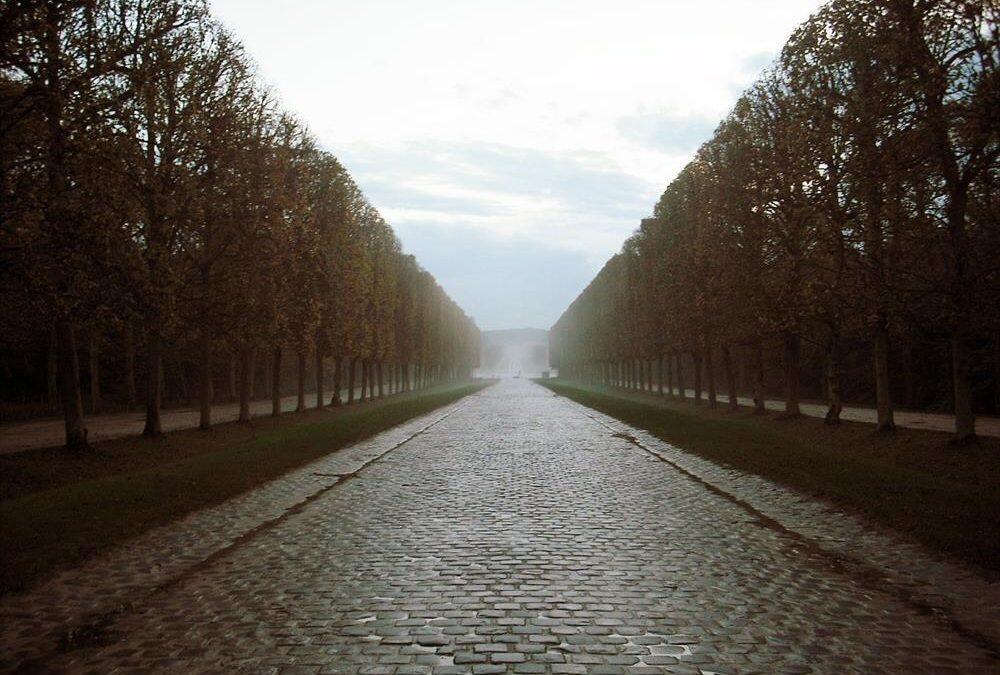 باريس تعتزم زراعة 170 ألف شجرة لتحسين مناخها