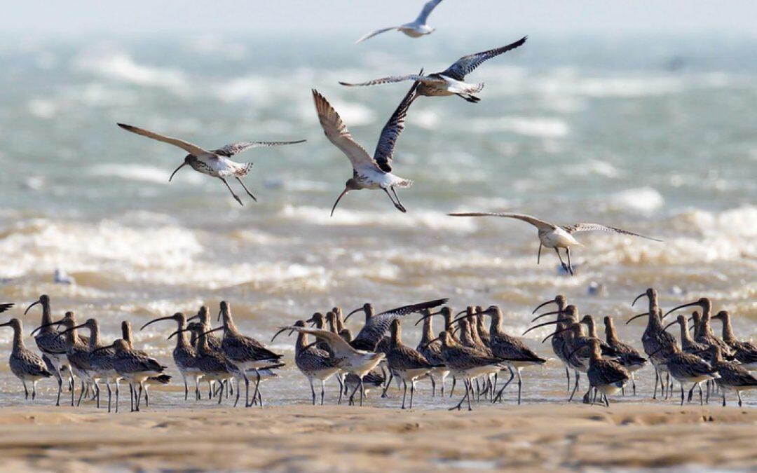 انقراض ملايين الأنواع.. المجلس العالمي للتنوع يدق ناقوس الخطر